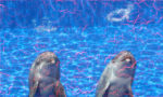 水族館ガールの視聴率と感想