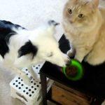 猫に餌やったり家事をこなす賢い犬!ナイラボーン動画(cm)