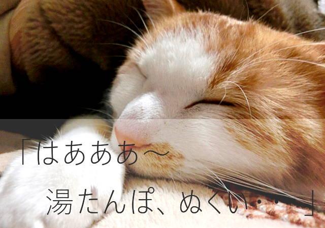 湯たんぽの暖かさを満喫する猫